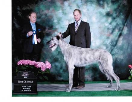 Arnprior Dog Show